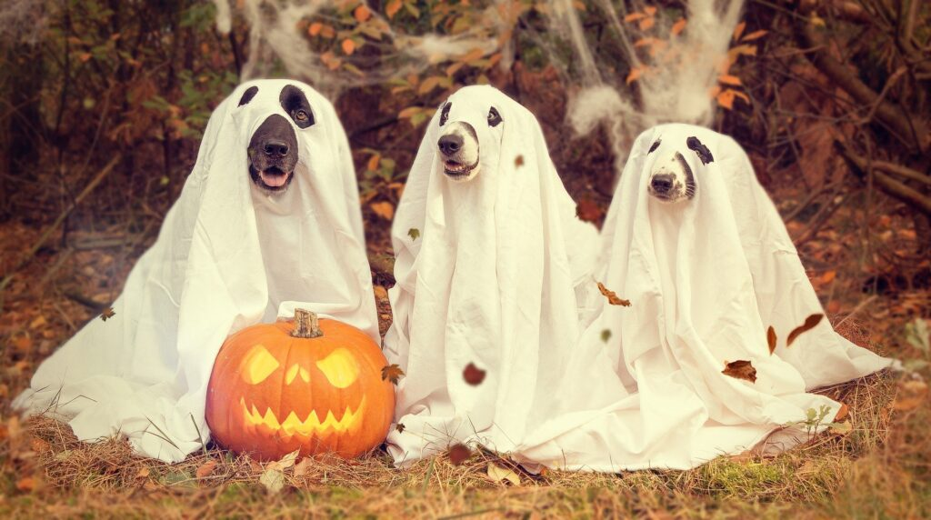 """Create a costume photo contest """"Halloween social media engagement"""""""